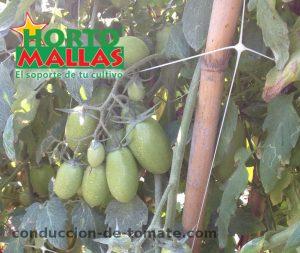 malla-espaldera-hortomallas-para-el-soporte-y-tutoramientos-de-los-cultvios-de-tomate